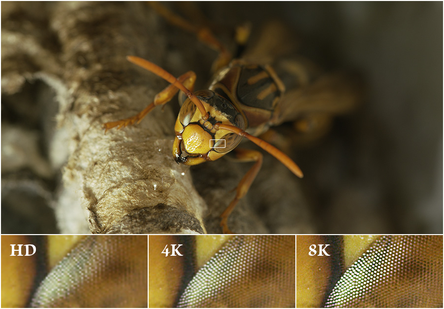 Wasp eye definition highlights the difference in resolution/definition